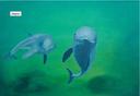 Delphin von Hilde Rossmann